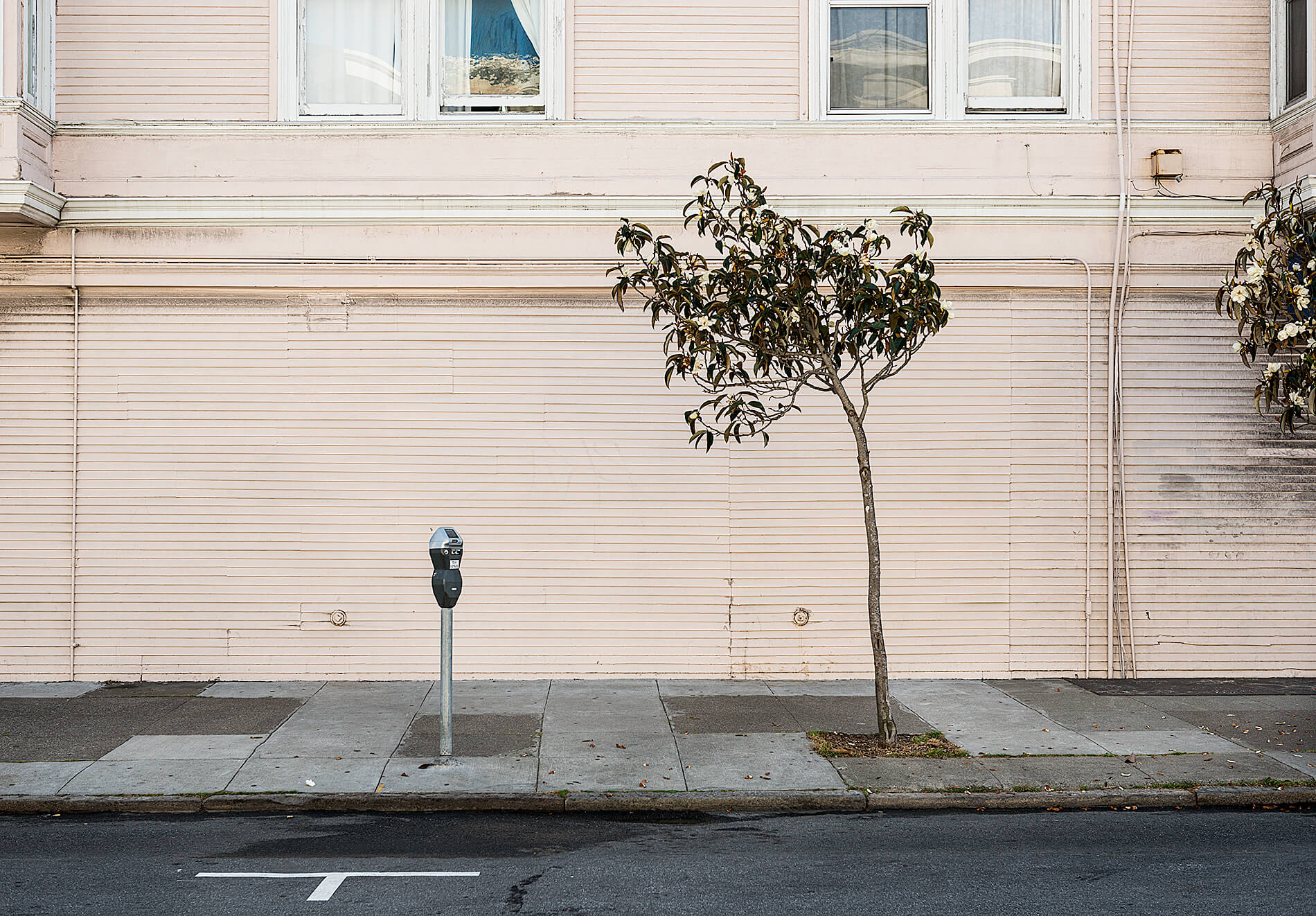 Tree and parking meter