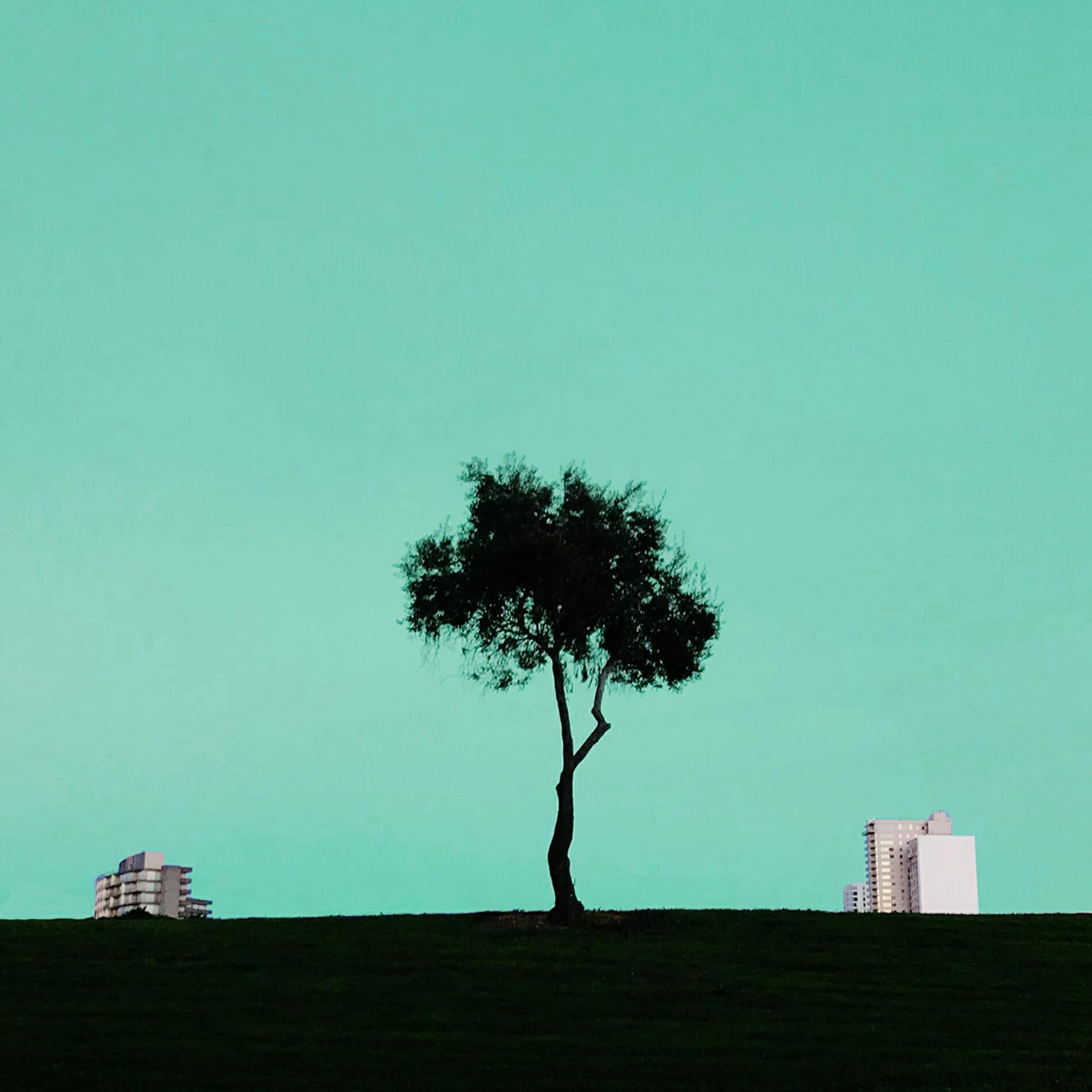 tree inbetween tall buildings
