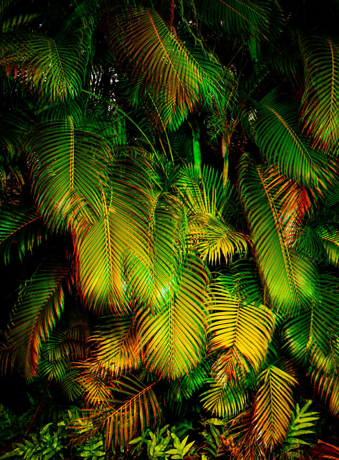palm tree leaves hawaii
