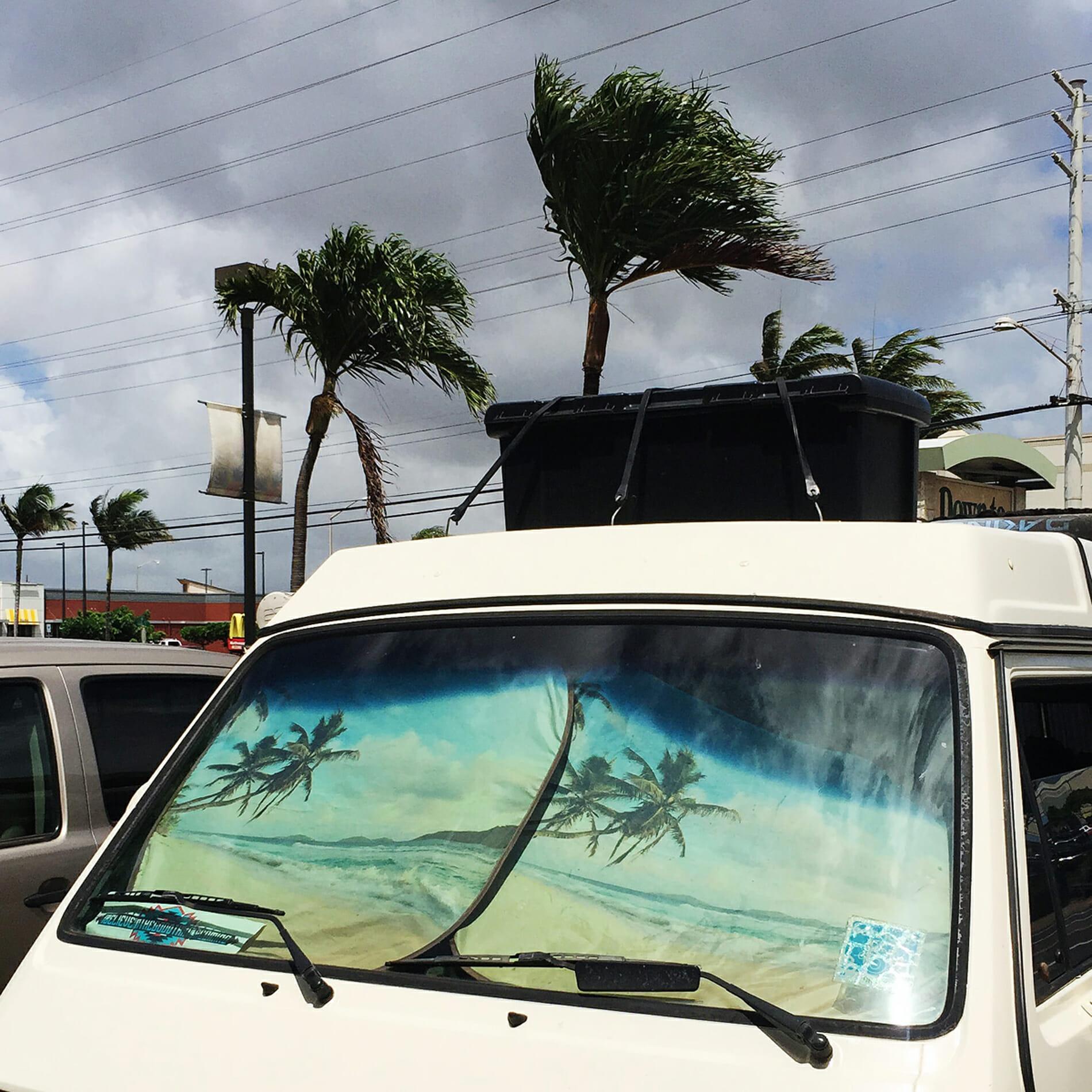 palm trees sun cover van
